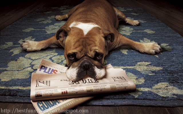Funny dog with newspaper.