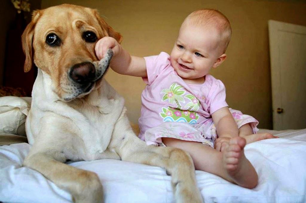 gambar-bayi-lucu-bermain-dengan-anjing