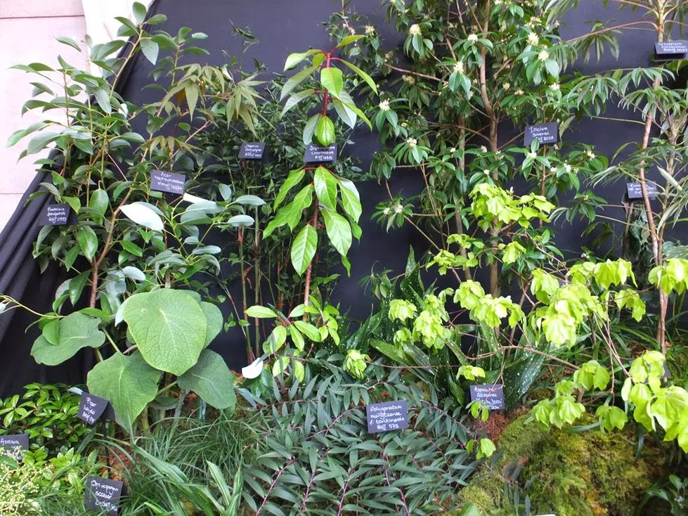 Crug Farm Plants