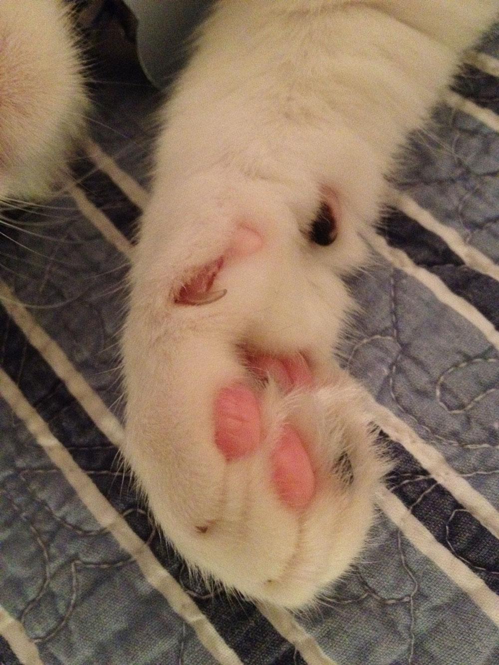 cat scratch fever ted nugent