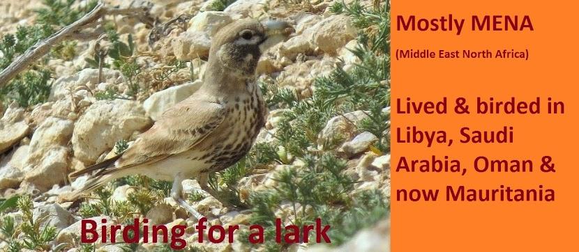 Birding for a Lark