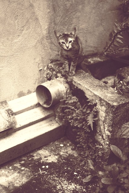 grey kitten by Julienne