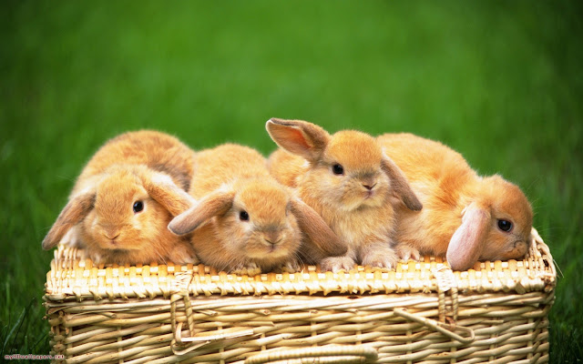 Cute Rabbits 7