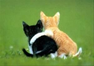 sahabat kucing