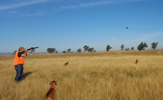 Hunting with Q and Beckett & the Vizsla bird man Steve.