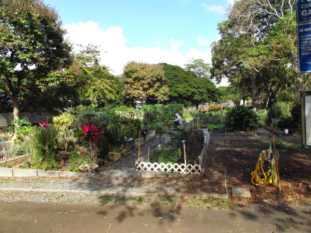 Garden club of pei gardens of the world foster botanical garden honolulu hawaii for Foster botanical garden honolulu