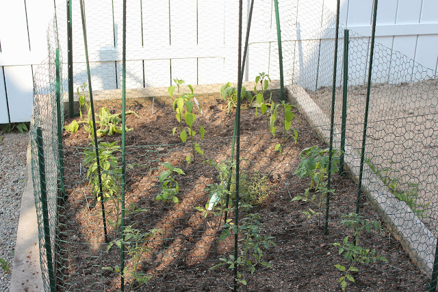 Raised bed garden with chicken wire