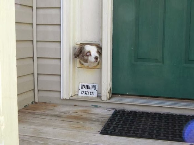 Cute dogs - part 3 (50 pics), dog looks through cat door