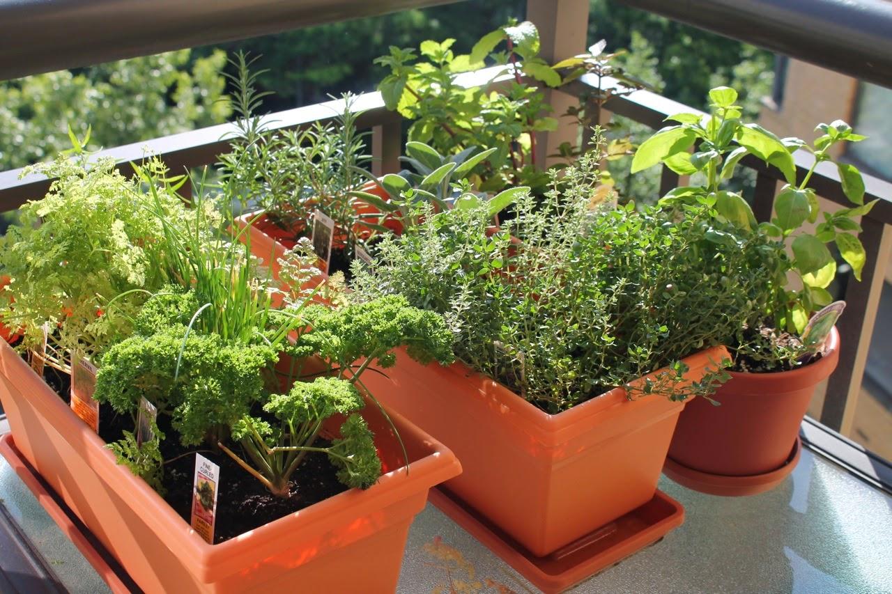 Balcony container herb garden