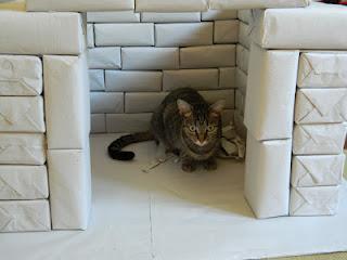 Gata Nina inspeciona construção de casinha para cães e gatos, feita com materiais recicláveis