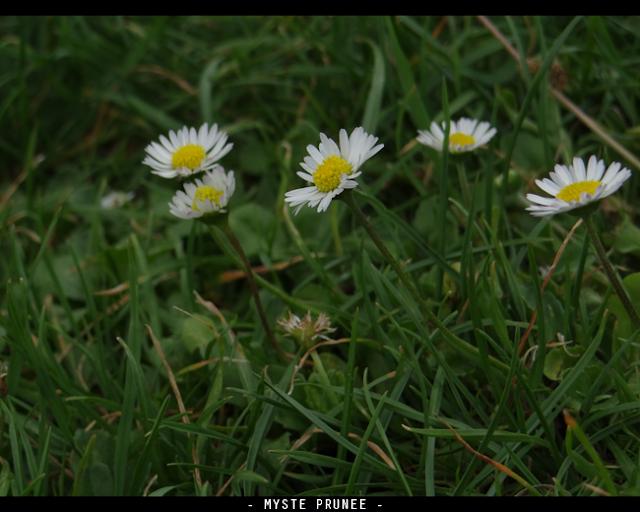 Gallerie Photo [Myste Prunee] DSC00277