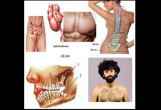 O corpo humano é um sistema complexo, com partes como membros, órgãos, tecidos, etc. que interagem de modo a nos permitir não apenas existir, mas também funcionar e se relacionar com o mundo. E elas são todas fundamentais, já que, se alguma falhar, todo o corpo é afetado.