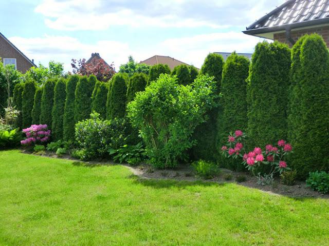 khu vườn đẹp