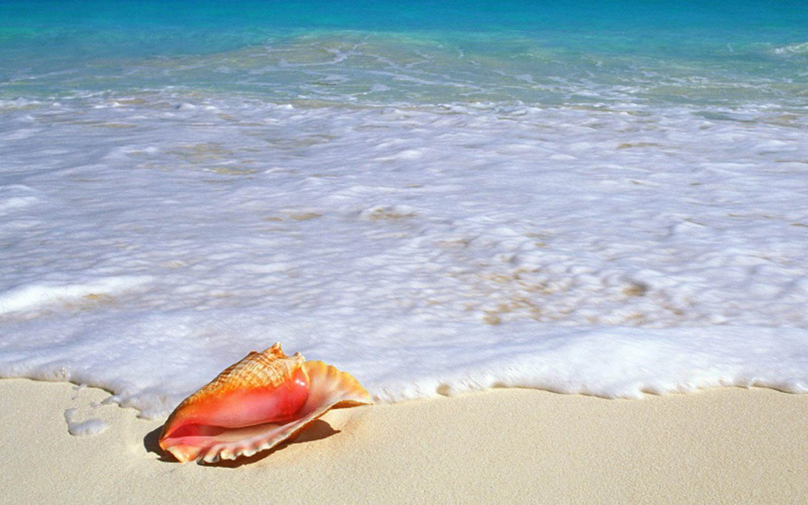 Hd wallpapers pictures of shells on the beach - Playa wallpaper ...