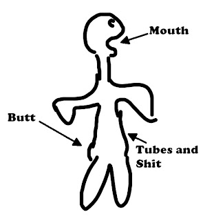 Human digestive system: Mouth, butt, tubes and shit