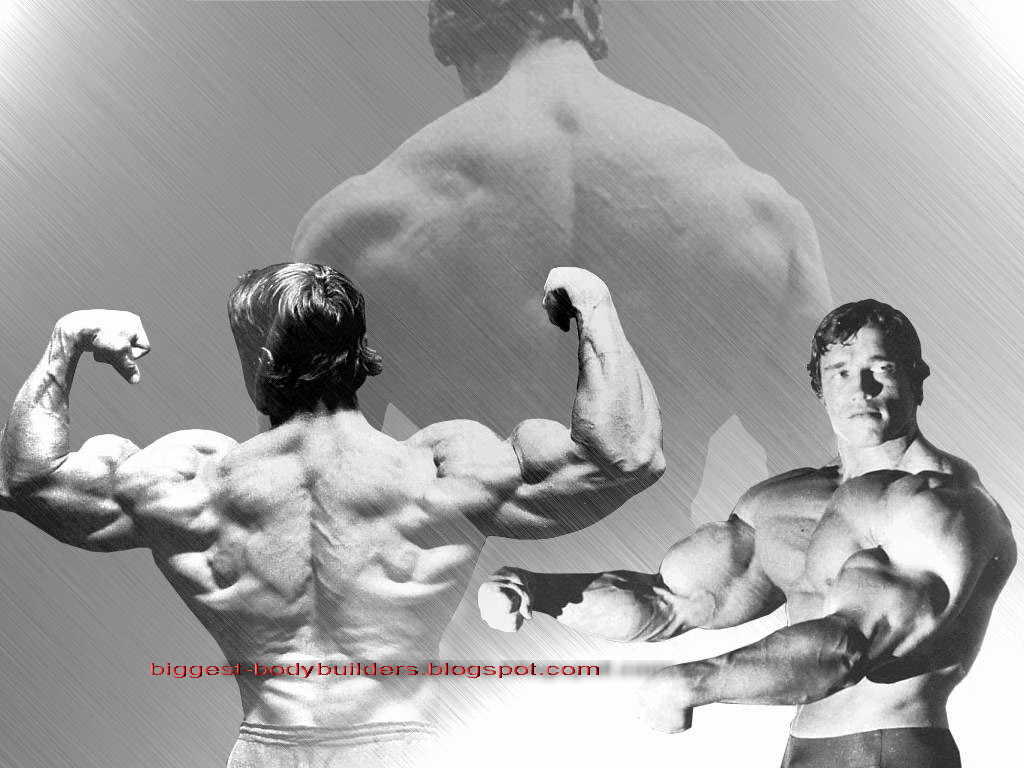 biggest body builders: arnold schwarzenegger wallpaper hd