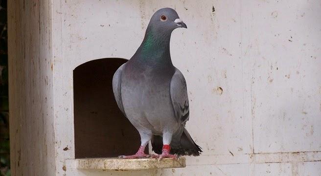 Sistemas antipalomas en madrid 91 683 45 97 josant - Pinchos para palomas ...