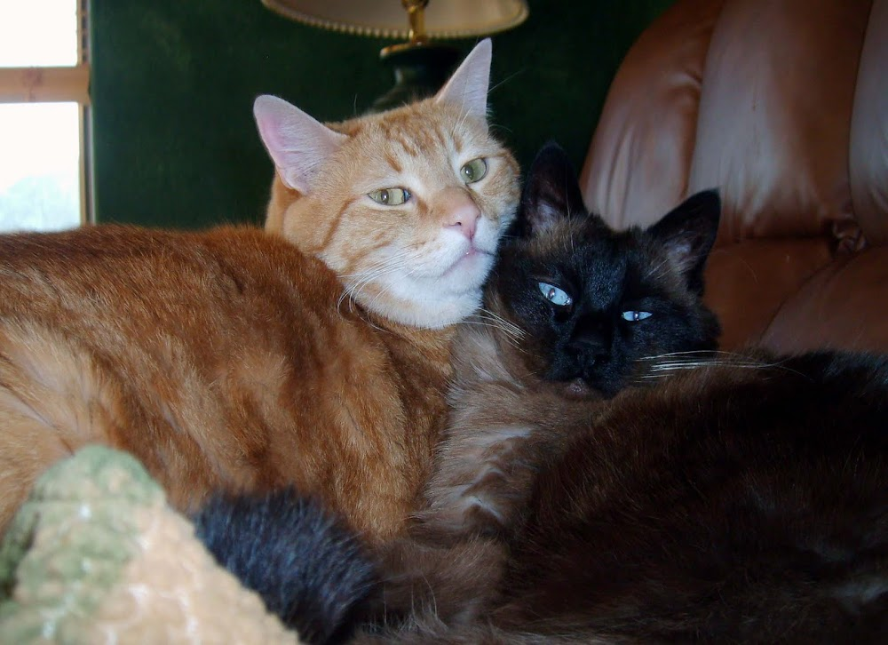 Our oldest boys, DT and Stormy
