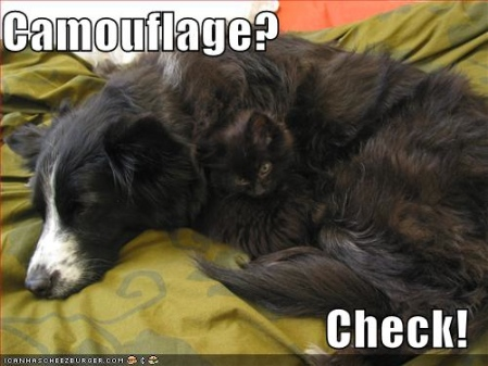2Leep Onlie: funny cats photos