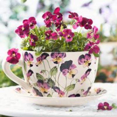 Jardins, flores em xícaras