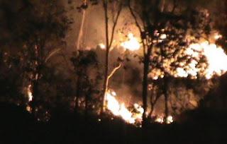 Hutan Rogoselo Terbakar, 3 Hektar Pohon Karet Ludes