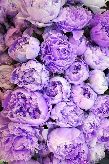 Beautiful peonies. Wishing these were blooming all year round.