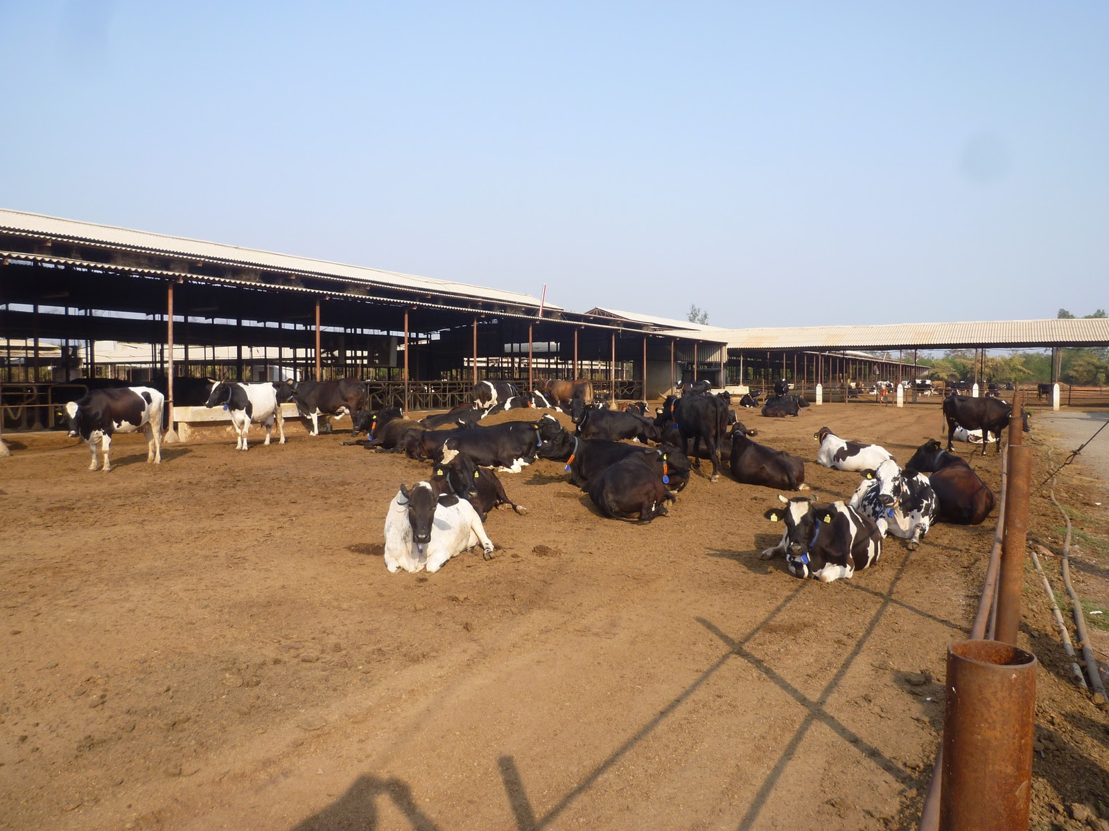 Economics Dairy Farming India http://meticulousbuildingco.com/17/indian-dairy-farmer