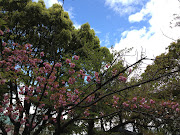 Today we spent the day at Wakayama Castle. The sakura are still in bloom, .