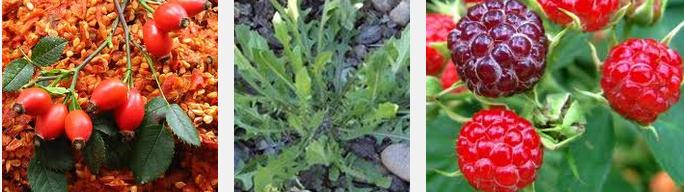 Şifalı Bitkiler Nelerdir Faydaları ve Zararları Nelerdir
