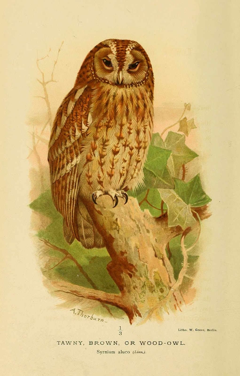 The Birds Of Archibald Thorburn With FREE Pictures