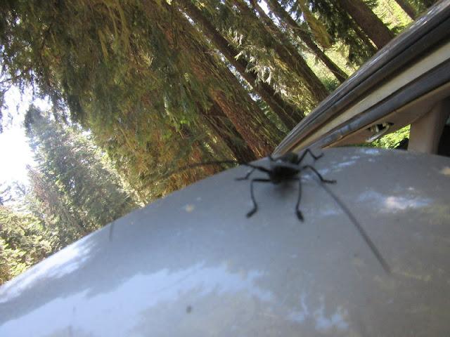 Bug visitor