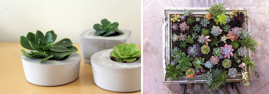 Love diy succulent gardenpot tell love and party love diy succulent gardenpot workwithnaturefo