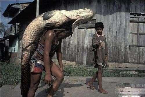 foto binatang besar raksasa