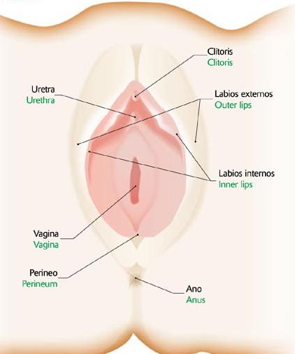 genital femenino externos: