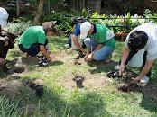Alcaldía de Mérida inició jornadas de plantación de árboles