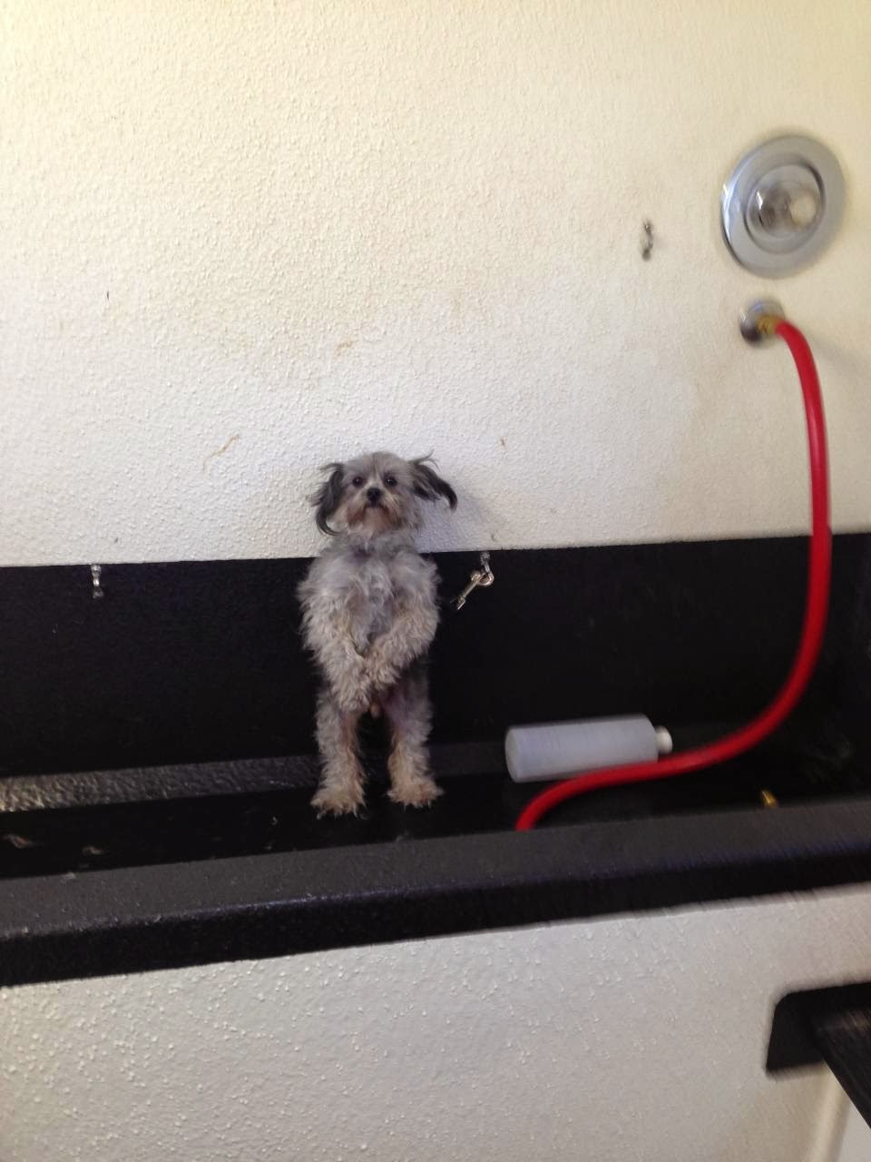 adorable dog pictures, puppy doesn't want to go bath