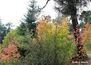 Paseos de otoño