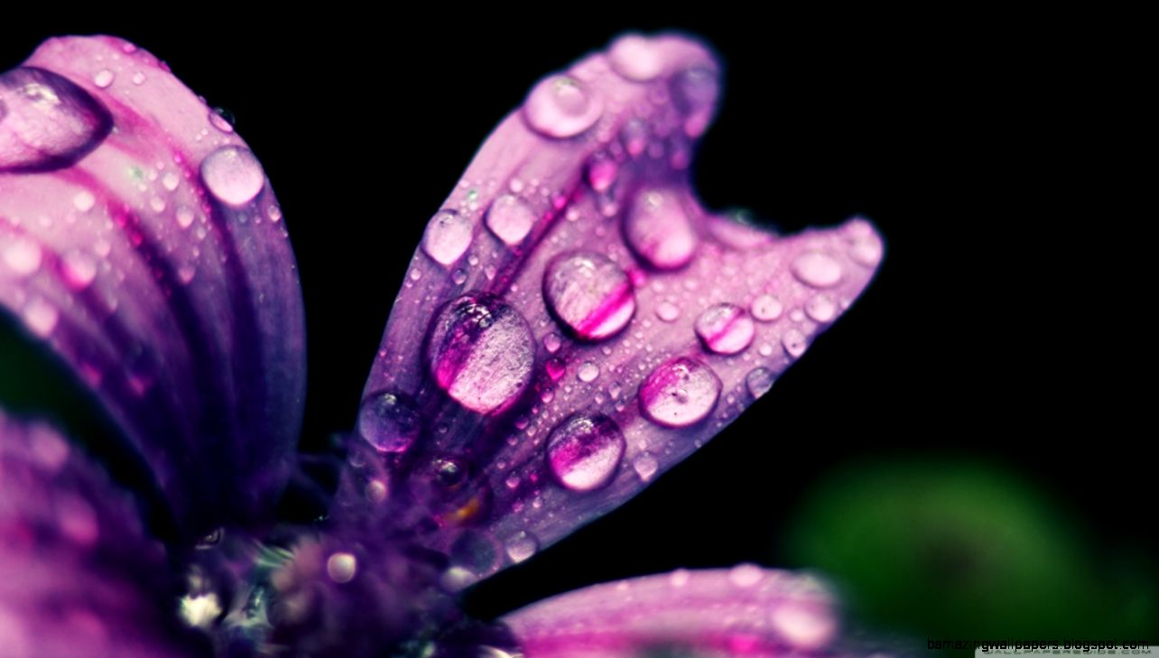 Spring Rain Drops HD desktop wallpaper  High Definition