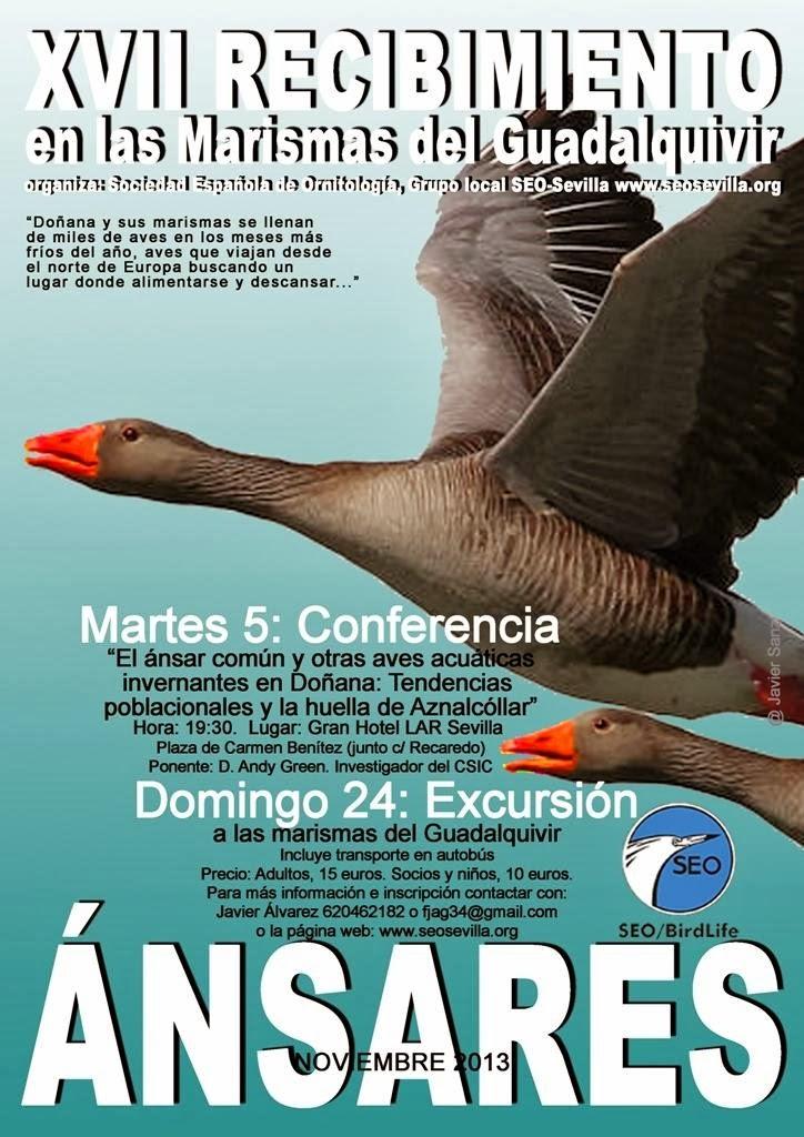 XVII Recibimiento de los Ánsares 2013 SEO-Sevilla