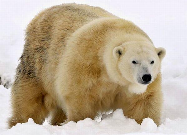 لدينا اليوم 30 صورة مدهشة لمجموعة من الحيوانات أتمى ان تنال إعجابكم