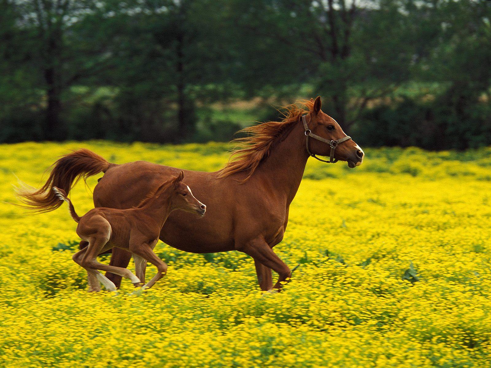 http://3.bp.blogspot.com/-yKYUTlrHNMg/TaP9SSFTEhI/AAAAAAAAAZY/Rx6w7AAyAqk/s1600/Arabian+Mare+and+Foal%252C+Louisville%252C+Kentucky.jpg