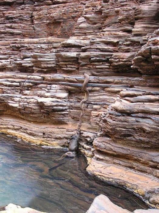 крупнейшая змея в бассейне амазонки