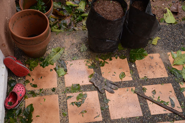 debris and gardening equipment at backyard