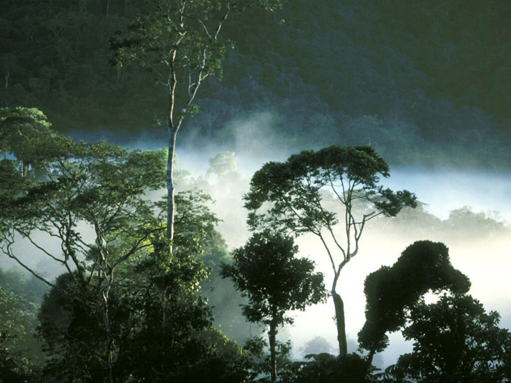 tropical rainforest plants and animals