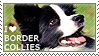Apaixonada por Border Collies