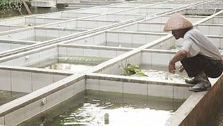 cara budidaya ikan,di kolam terpal,gurame,lele,resensi budidaya,