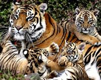 Persebaran Flora dan Fauna Indonesia 1