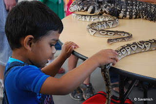 kids touch snakes