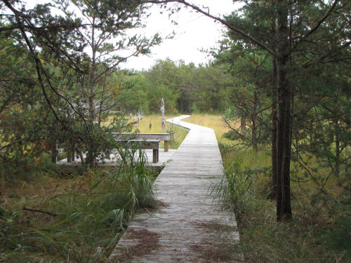 boardwalk through Dead Horse Marsh