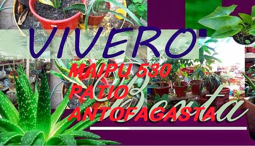Antofagasta y sus problemas este polvo te mata for Vivero antofagasta